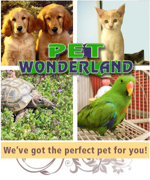 Puppies for Sale - Wilkes Barre PA - Pet Wonderland - Puppies for Sale - We've got the perfect pet for you!